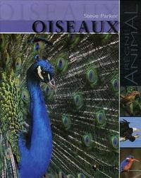 Coachingcorona.ch Oiseaux Image