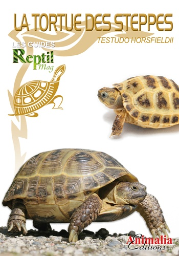 La tortue des steppes. Testudo horsfieldii