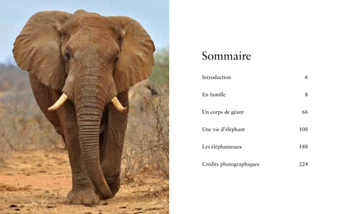 Les éléphants. Puissants et délicats