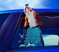 Various - Dogs Hanging Out Of Windows.